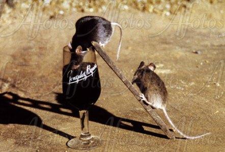 ratas copa