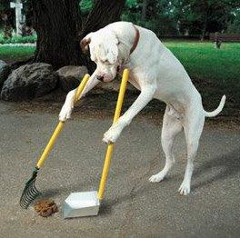 gos amb plasta