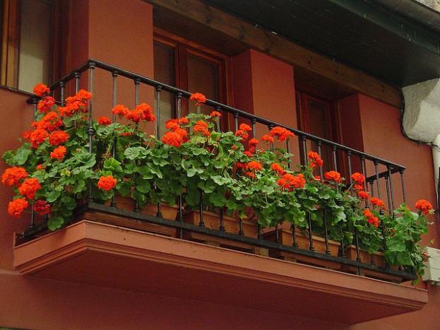 balcon geranios