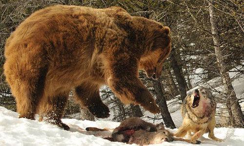 lucha animales