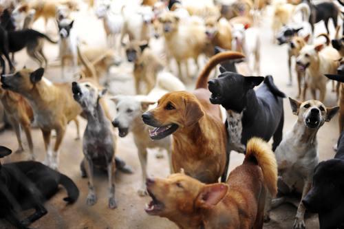 Barking-Dogs