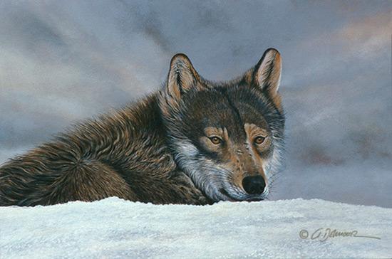 Lobo_en_nieve--600x...